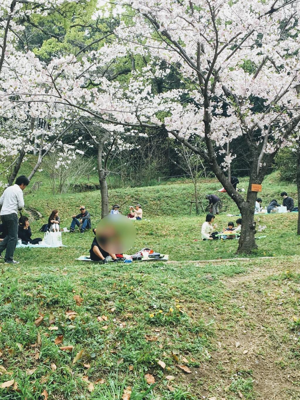 福岡の西公園に子連れで花見に行ってお弁当を食べた画像
