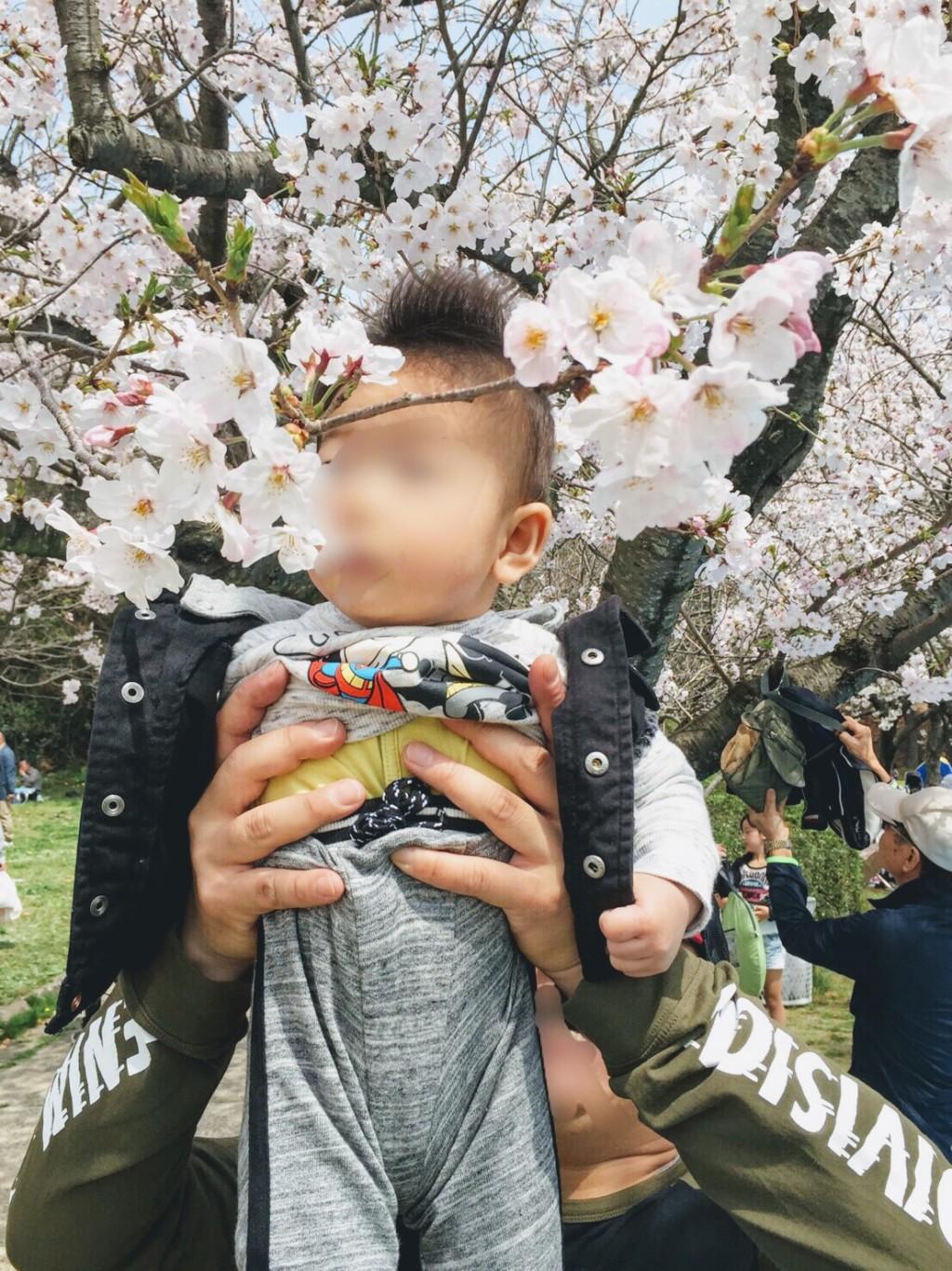 福岡の小戸公園に子連れで行った花見の桜の画像