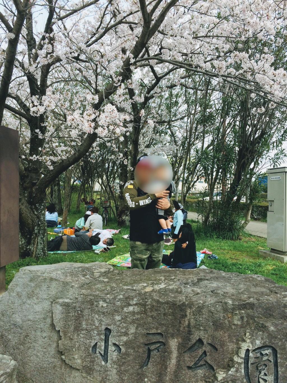 福岡市の小戸公園の桜の画像