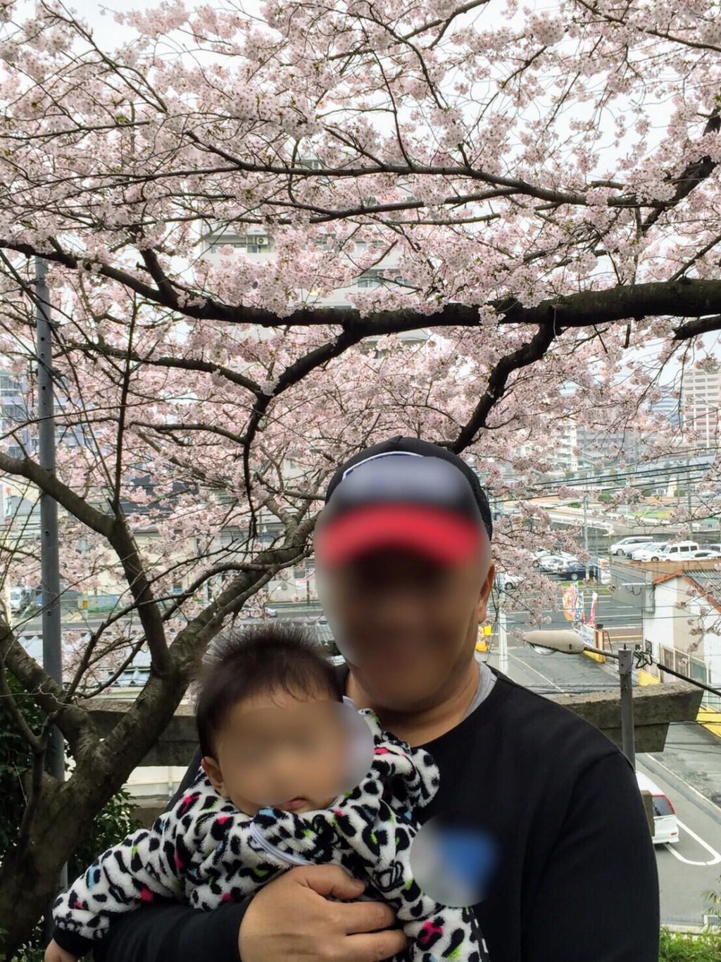 福岡の愛宕神社の桜の画像