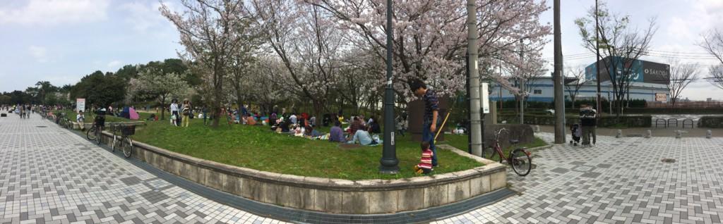 福岡の小戸公園に子連れで花見に行った画像