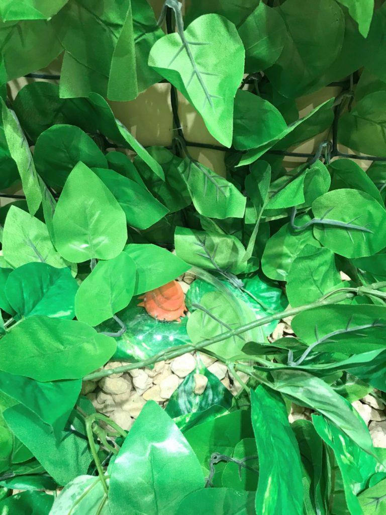 うんこ展示会でうんこムシを見つけた画像