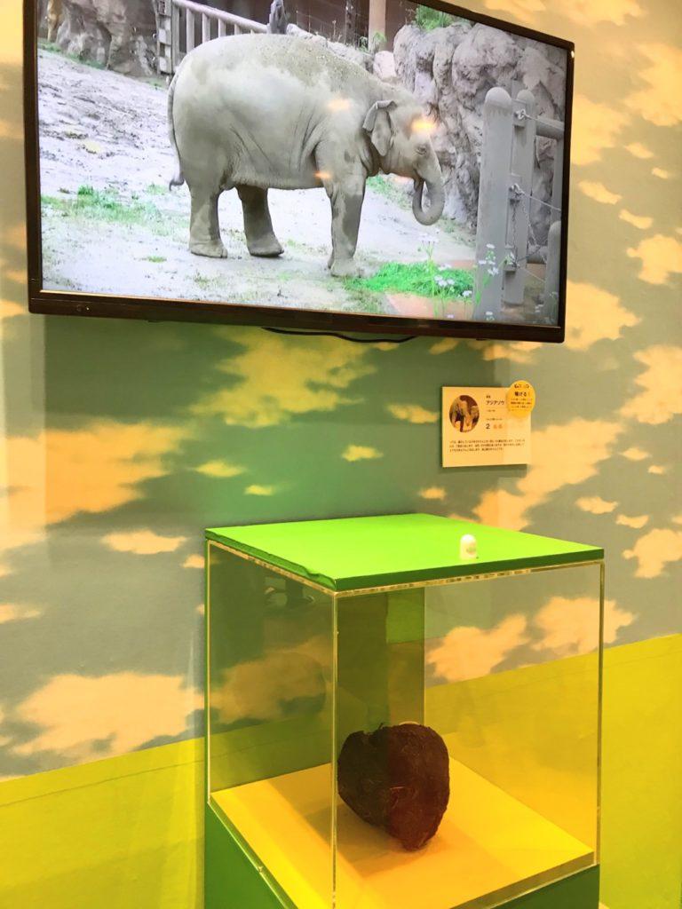うんこ展示会の動物たちの本物のうんこ画像