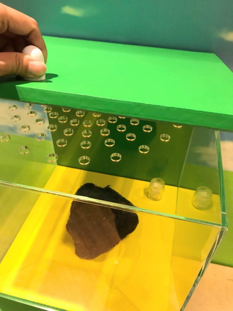 うんこ展示会のアジアゾウのウンコの臭いを嗅ぐ画像
