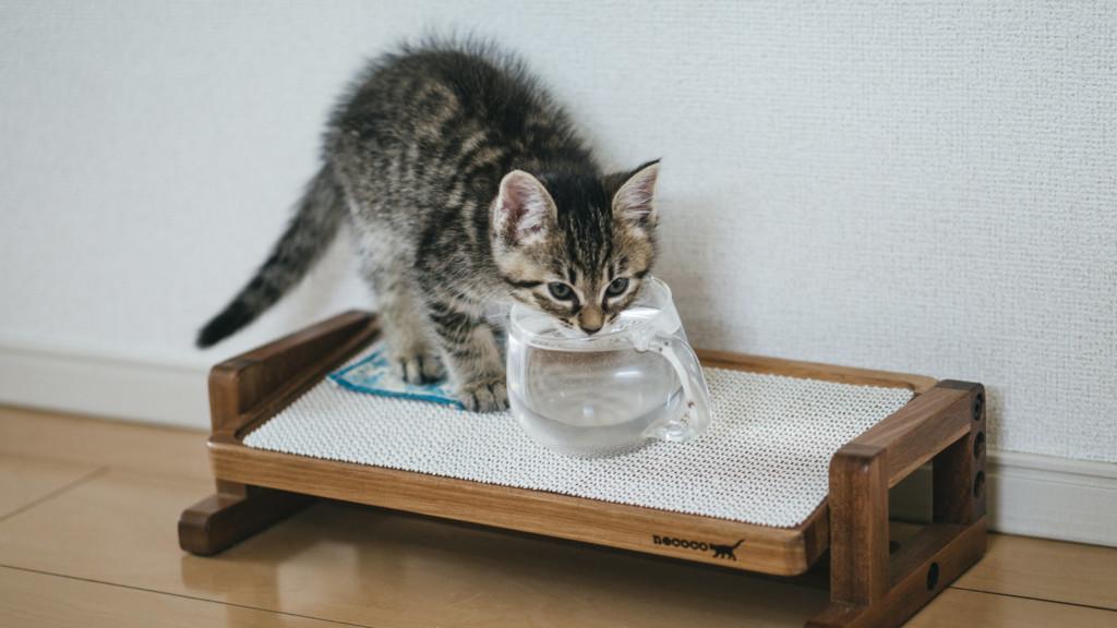 猫の便秘トイレ画像