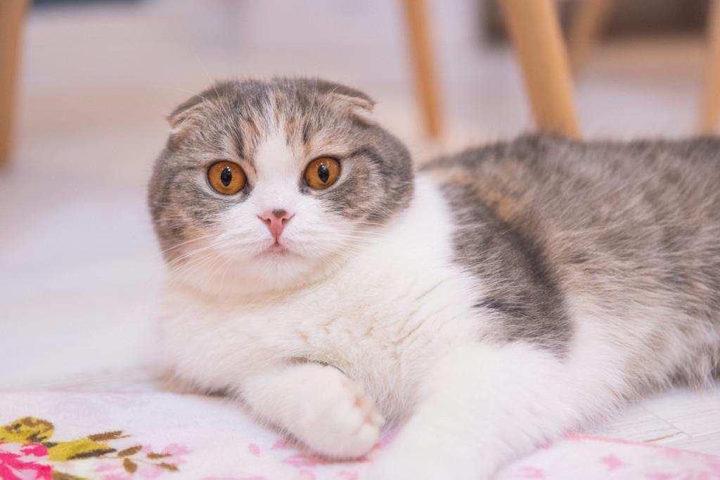 猫の鼻水の取り方猫画像