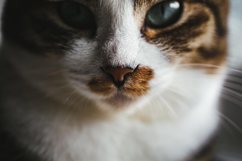 猫が鼻水が出た場合の対処法や治し方猫の画像